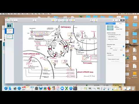 Dr. Kevin Conners - Oncogenes, Suppressor genes and the Cell Cycle
