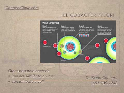 Mechanisms of Cancer - H. Pylori Dr. Kevin Conners