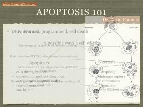 Apoptosis 101 for Cancer Patients