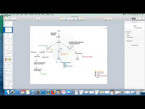 Dr. Kevin Conners - Cancer Genes - Section 2 - Energy Genes