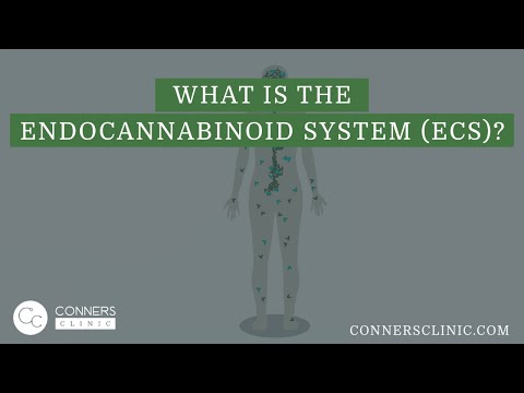 What is the Endocannabinoid System (ECS)? | Dr Kevin Conners, Conners Clinic