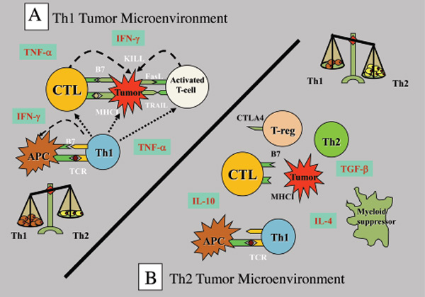 Cancer as an Autoimmune Disease