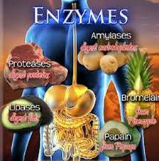 Cancer and Enzyme Therapy