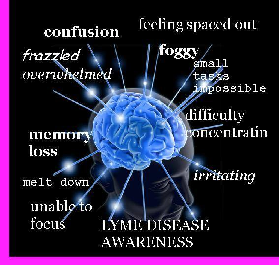 Lyme and the Limbic System