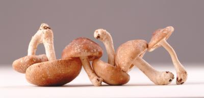Medicinal Mushrooms in Alternative Cancer - AHCC