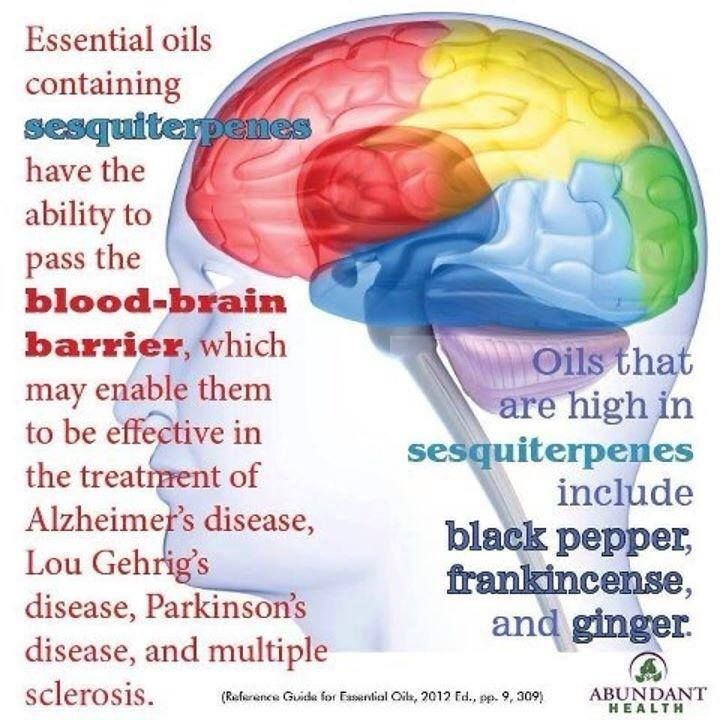 Lyme and Healing the Blood Brain Barrier