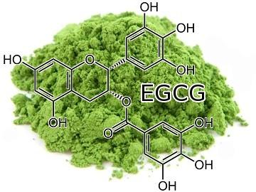 Green Tea blocks Cancer