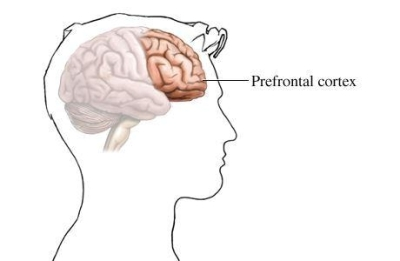 Lyme and Prefrontal Cortex Problems