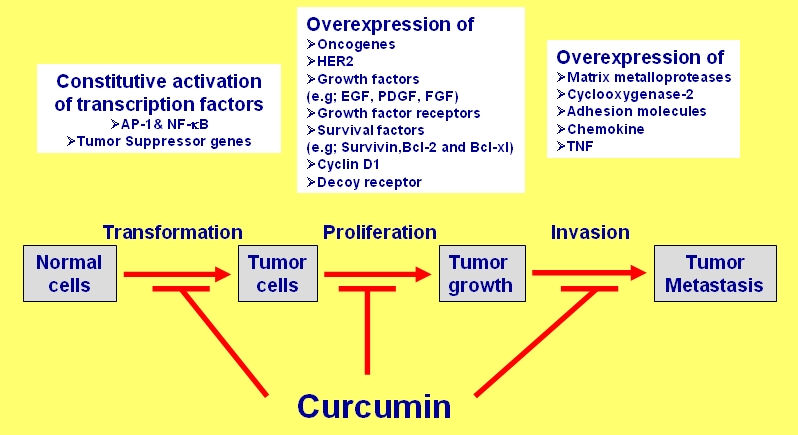 Cancer and Curcumin