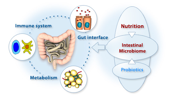 Gut Microbiota and the Brain