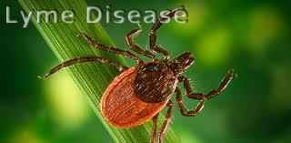 Dr. Conners Lyme Webinar