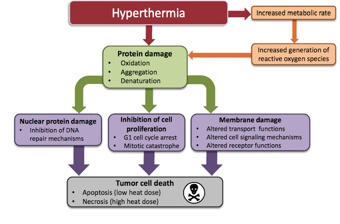 hyperthermia-cancer-treatment-vancouver
