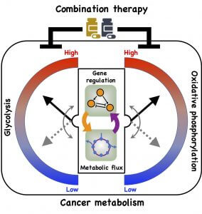 Cancer's Ability to Change Fuel Sources 2