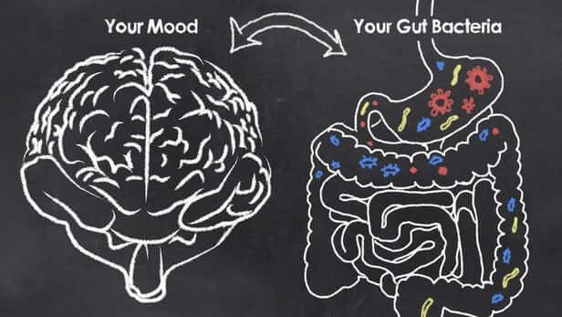 gut microbiome depression 1
