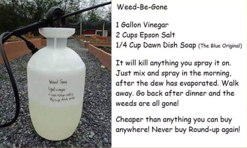 weed-be-gone-homemade-diy-weed-killer-monsanto-roundup-lawsuit-dr-kevin-conners-clinic