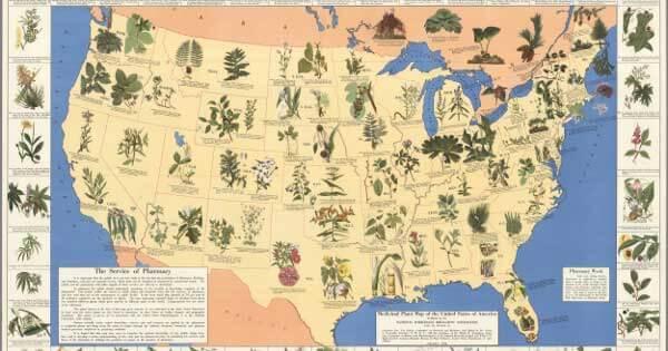 Large-Medicinal-Plants-backyard-pharmacy-back-yard-farmacy-merck-1899
