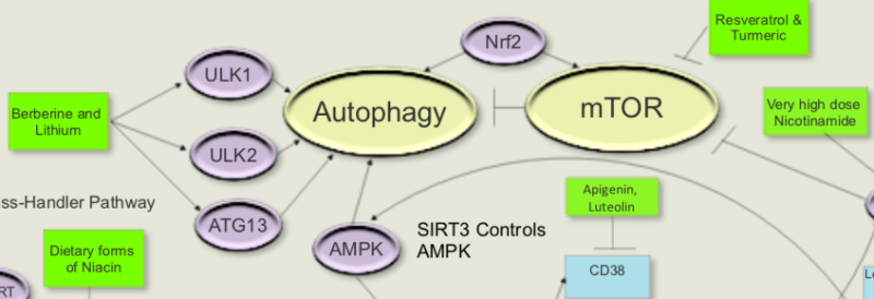 Autophagy - cleaning up the trash around your tumor 1