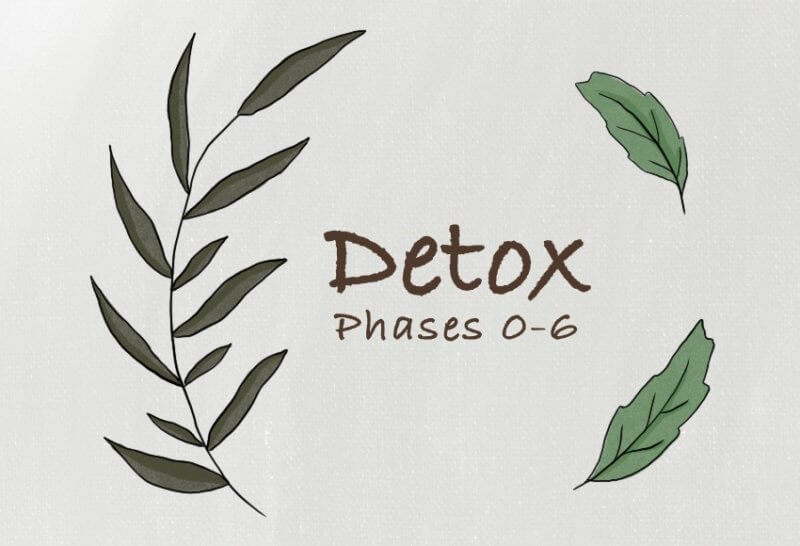 7 Phases of Detox - Conners Clinic Alternative Cancer Treatment