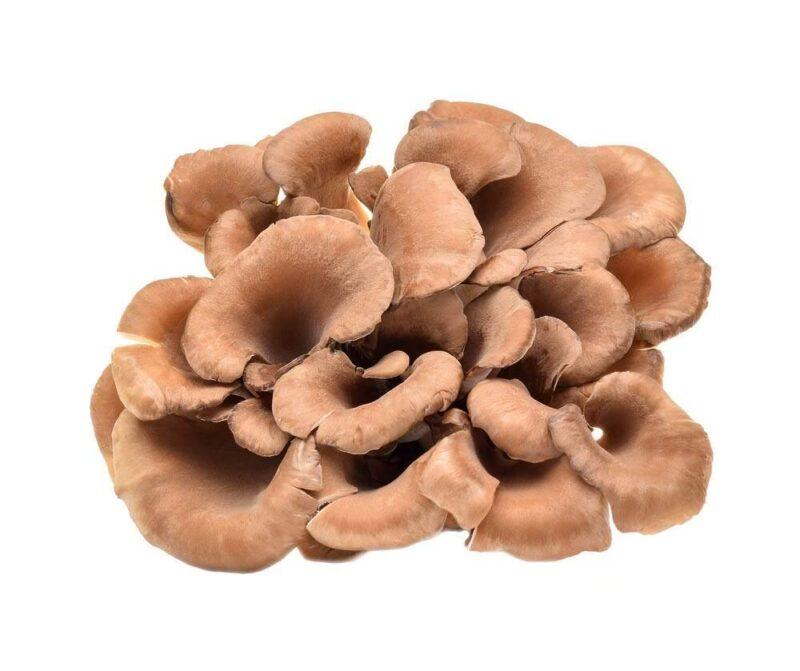 Maitake: The King of Mushrooms 1