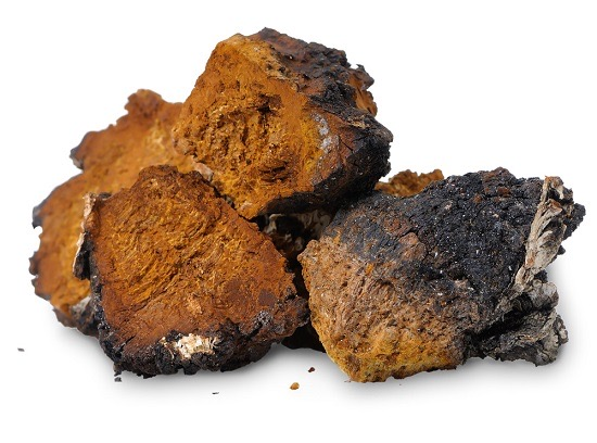 Chaga: The Treasure of the Forest 1
