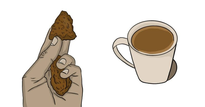 how-chaga-helps-support-a-vibrant-immune-system-conners-clinic-natural-health
