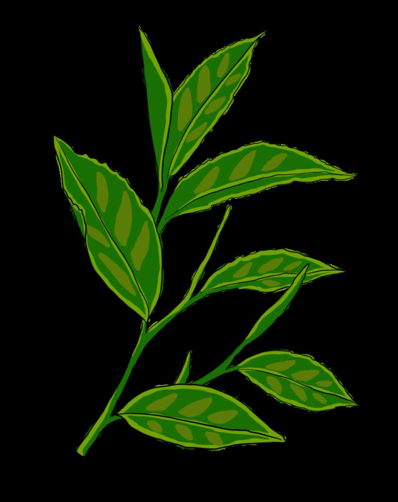 Green Tea Extract & EGCg—A Potent Antioxidant 1