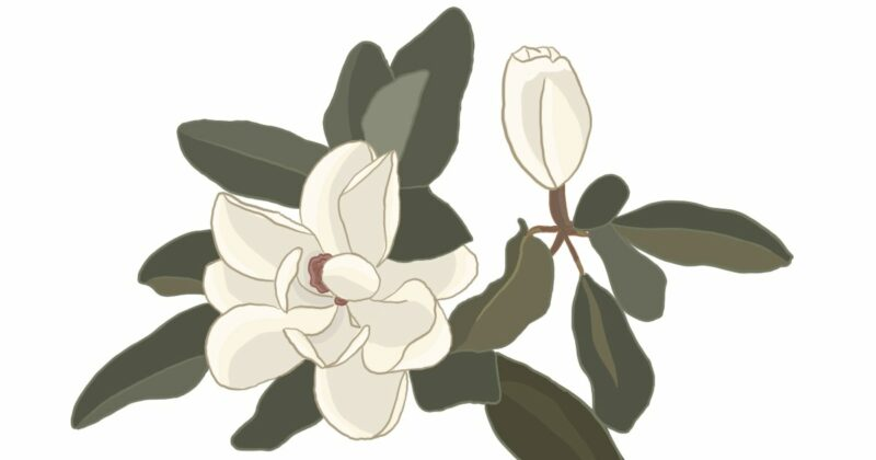 inhibiting-cancer-growth-magnolia-conners-clinic-alternative-medicine