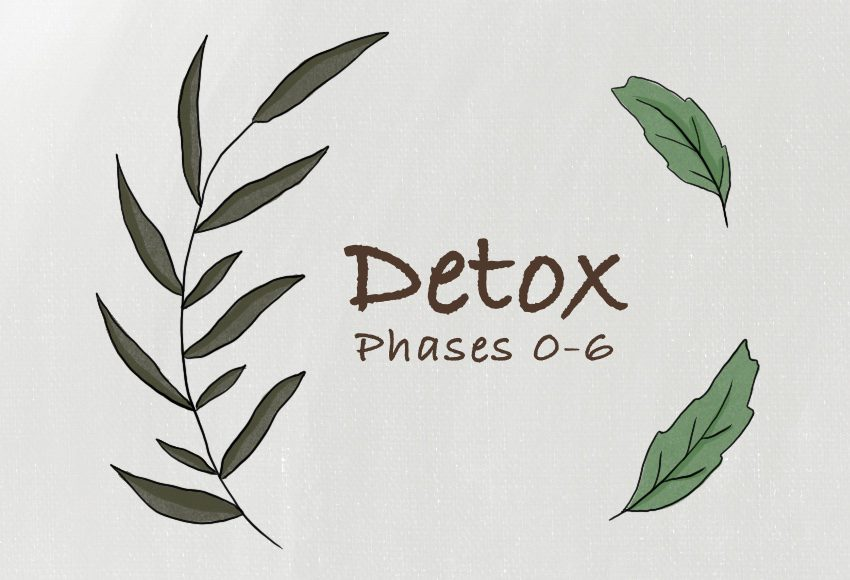 7 Phases of Detox | Conners Clinic
