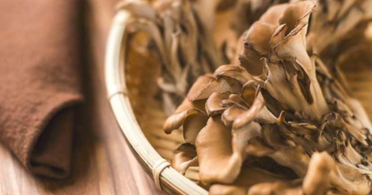 maitake-the-king-of-mushrooms-conners-clinic-blog-natural-health